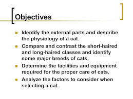 compare and contrast essay about cats and dogs animal hospital  compare and contrast essay on pet dog or cat essay example