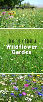 how to grow a wildflower garden the