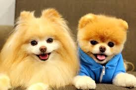 cute baby dog. Interesting Cute And Cute Baby Dog YouTube