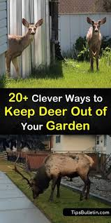 clever ways to keep deer out of your garden