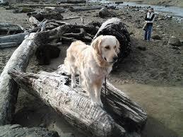 oregon coast living 11 best the joys of living assistance dogs images on pinterest
