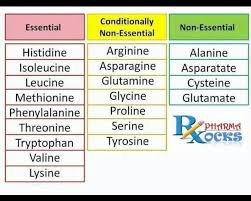 Amino Acid Characteristics Chart Pin On Healthy Me
