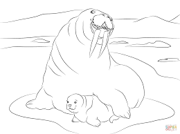 Small Picture Walrus with Cute Baby coloring page Free Printable Coloring Pages