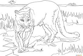 coloring mountain lion page excellent drawing best images collections hd for gadget inside pictures kids