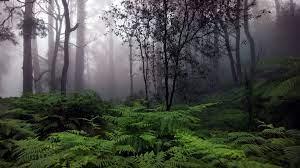 Jungle Rain Wallpapers - Top Free ...