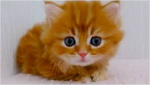 cute fluffy kittens.  Kittens In Cute Fluffy Kittens T