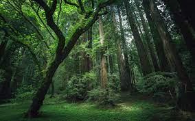 HD Jungle Wallpapers, Beautiful Nature ...