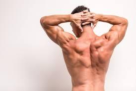 「背中 筋肉」の画像検索結果