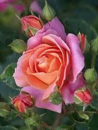 Цветы: лучшие изображения (1582) в 2019 г. | Красивые цветы ...