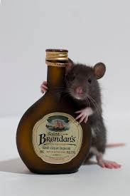 Ratten lokken