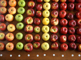 Apple Texture Chart The Best Apples For Apple Pie The Food Lab Serious Eats