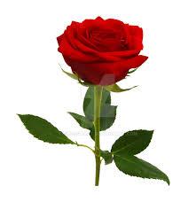 Image result for red rose