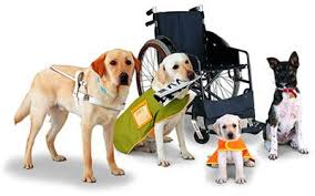 Blog Epidemic Info Fake Spotting Service Animal Ability Chicago vEqOFF