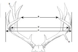 What Makes A 160 Inch Mule Deer Basic Field Judging