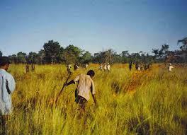 essay on urbanization of rural areas in words