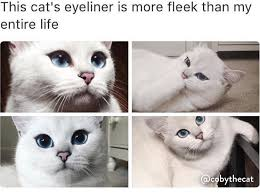 Cat Quotes Best THIS CAT IS PRETTIER THAN MOST HUMANS Imgur