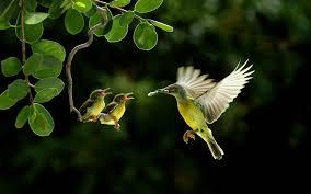 adorable hummingbird wallpaper 3658423 1920x1200