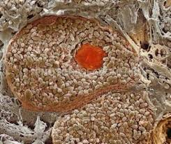 breath taking microscopic images layer of eye