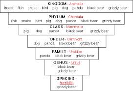 42 Matter Of Fact Dog Taxonomy Chart