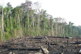amazon rainforest deforestation.  Rainforest Destroyed Tropical Rainforest In The Amazon Basin Brazil In Rainforest Deforestation