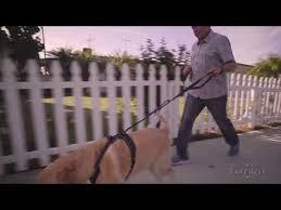 Rabbitgoo No Pull Dog Harness Instruction Youtube