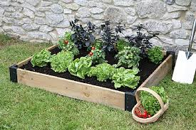 small wooden border for growing vegetables