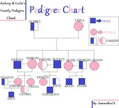 pedigree tree scisquad8 what s your pedigree