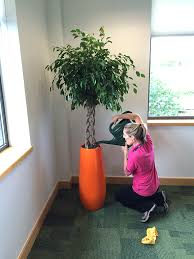 office plant displays.  Office Rent Office Plants On Office Plant Displays