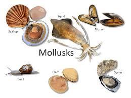 Oyster Identification Chart Fish Shellfish Identification The Culinary Pro