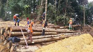 Sfc And Marine Police Join Forces Against Illegal Logging In Ulu