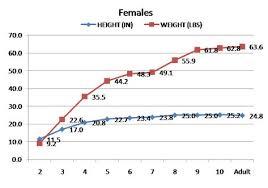 Doberman Growth Chart Female Image Result For Doberman Pinscher Puppy Weight Chart