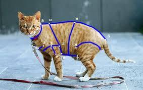 Выкройки для <b>кошек</b> своими руками. | ШИТЬЕ <b>ОДЕЖДЫ</b> ДЛЯ ...