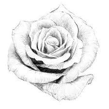 薔薇バラフリー素材のイラスト画像集めてみた