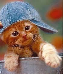 """Résultat de recherche d'images pour """"chat trop cute qui dit merci"""""""