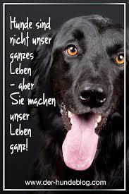 Tolle Neue Sprüche Und Zitate über Und Mit Hunden Schaut Auf Dem