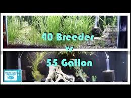 fish tank showdown 40 gallon breeder