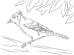 Small Picture Cute Blue Jay coloring page Free Printable Coloring Pages