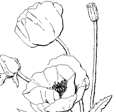 Poppy Coloring Page For Adults