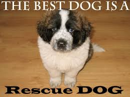 Inspirational Rescue Dog Quotes What Every Dog Deserves