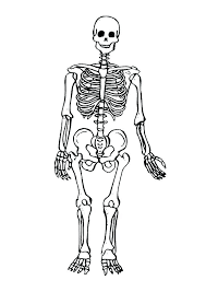 Muscle Coloring Page Skeleton Coloring Pages Printable Human Body
