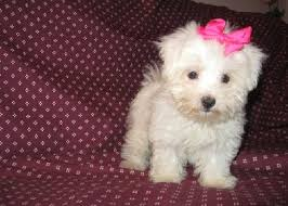 cute puppies for sale. Perfect Sale Inside Cute Puppies For Sale