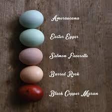 Uncategorized Maran Egg Color Chart Backyard Flocks Eggs