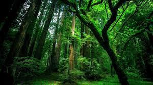 Forest Desktop Backgrounds Free ...