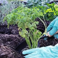 how to design an herb garden planet