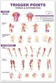 Muscle Pressure Points Chart Trigger Points Giant Chart Anatomical Chart Company
