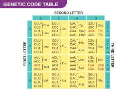 Genetic Code Genetic Tables Properties Of Genetic Code