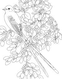 Small Picture bird colouring for adults Google Search Kular Pinterest