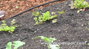 how to setup a drip irrigation system for a small vegetable garden