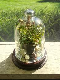 Glass dome arrangement final