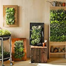 an indoor vertical garden